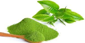 Bột trà xanh Matcha Lâm Đồng